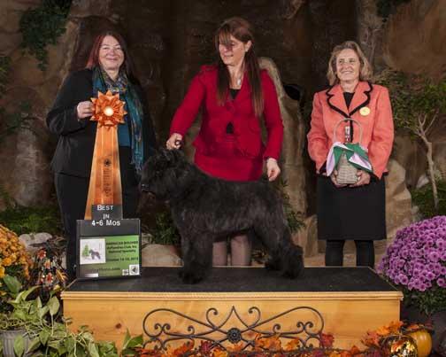 Adèle remporte le prix de Best Puppy