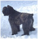Anais fille de Banff