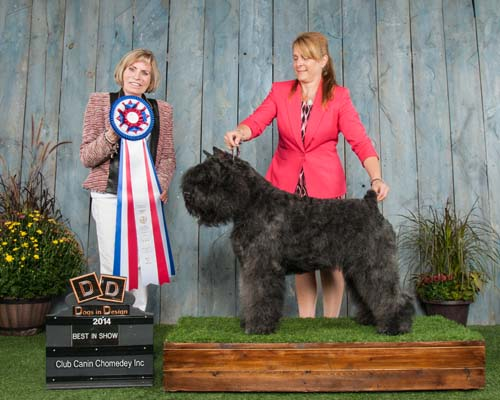 Adèle remporte le Best in Show