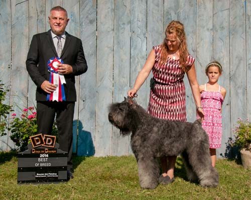 Kili remporte le Best of Breed