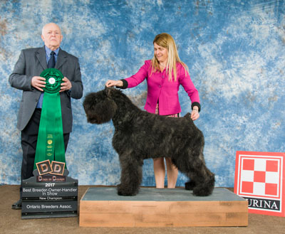 Q Best breeder,owner, handler,